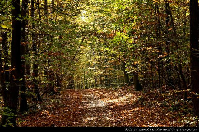 normal_chemin-foret_de_montmorency-54